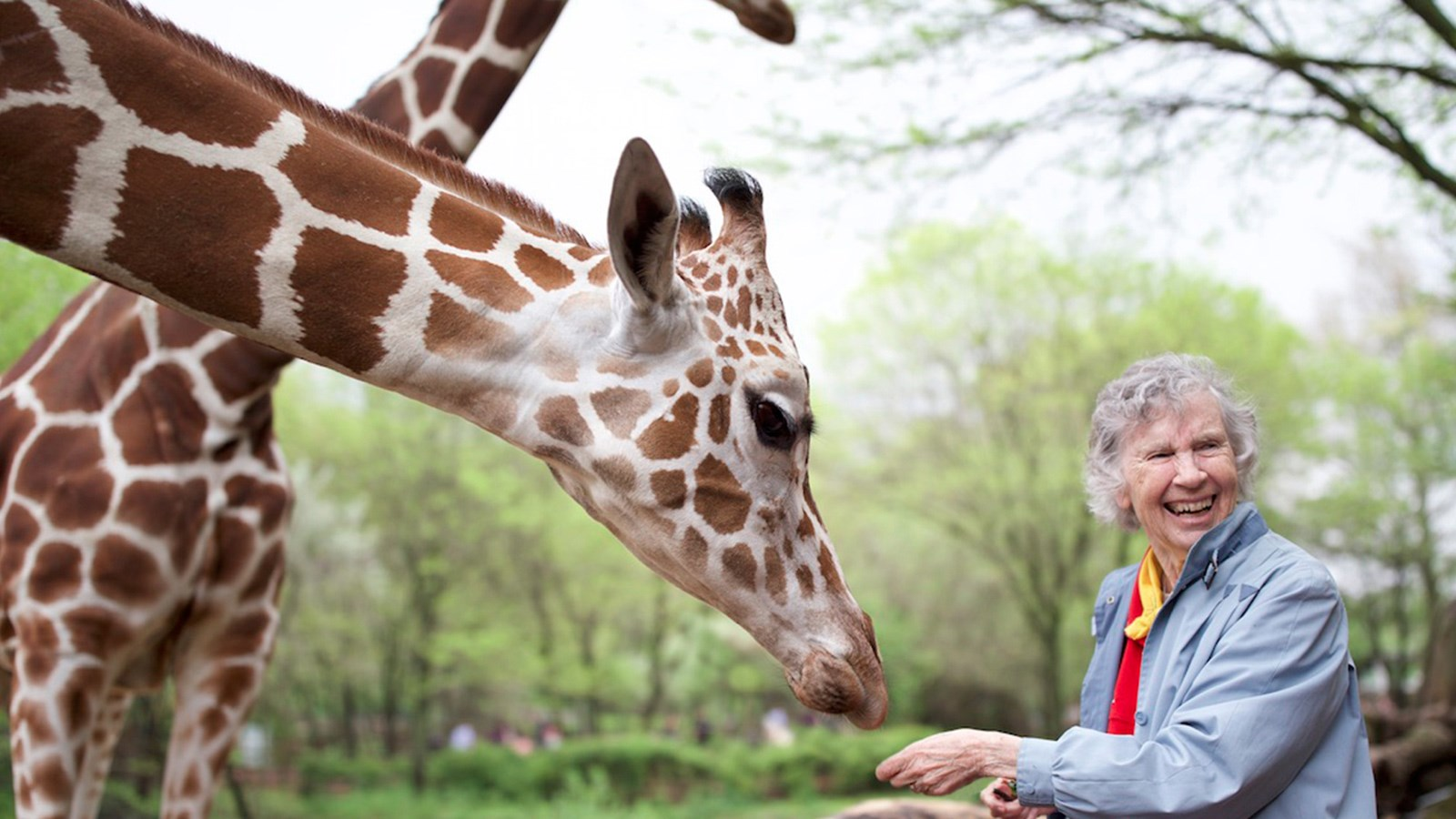 woman who loves giraffes at Arena Theater